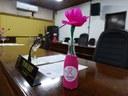 """Câmara acolhe campanha """"Outubro Rosa"""""""