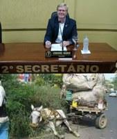 Vereador Coronel Mário solicita dados referentes ao recolhimento e castração de animais a Secretaria de Saúde