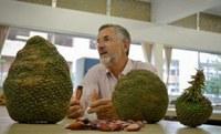 Vereador Coronel Mario solicita plantio de Araucárias