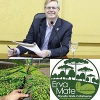 Vereador Coronel Mário solicitou programa para fomentar o plantio da erva mate no município
